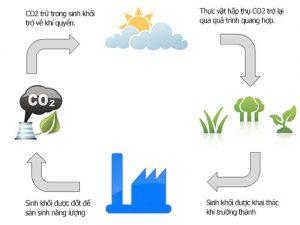 Hình minh họa5: Năng lượng sinh khối