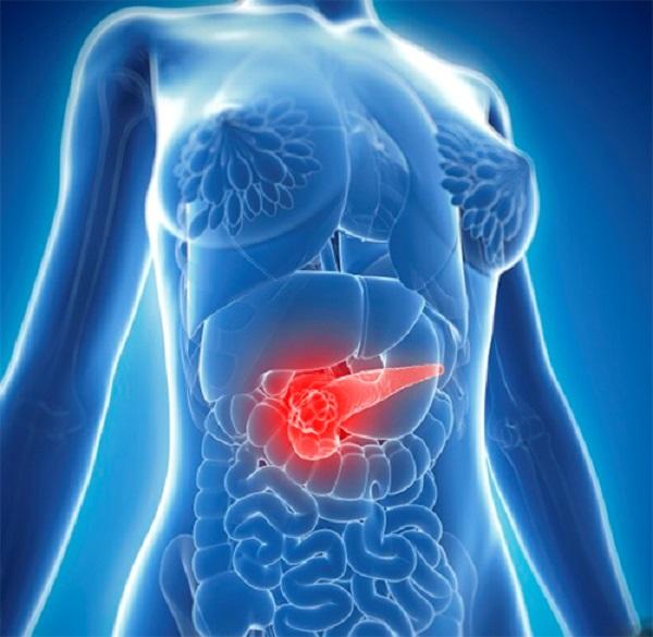 Chức năng ngoại tiết và nội tiết là các chức năng chính của tuyến tụy