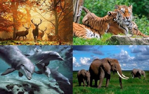 giới động vật trong giới sinh vật