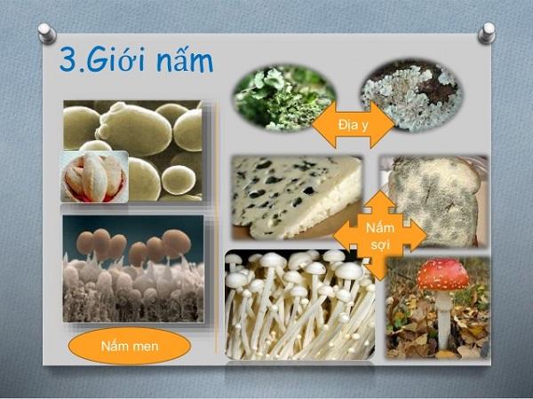 giới nấm trong giới sinh vật