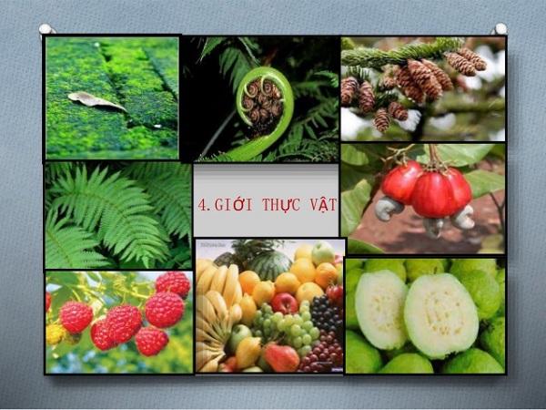 giới thực vật trong giới sinh vật