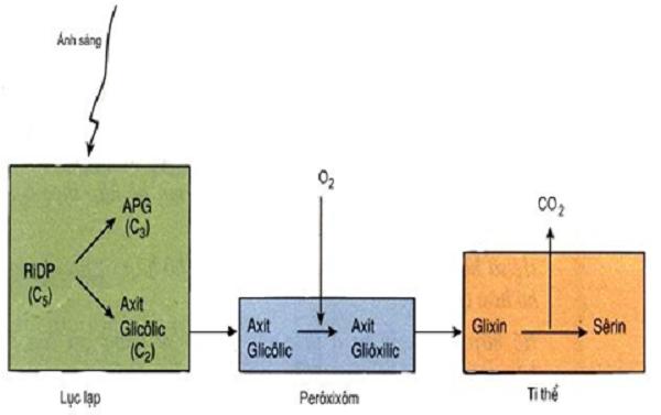 ảnh hưởng của môi trường đến hô hấp ở cây xanh
