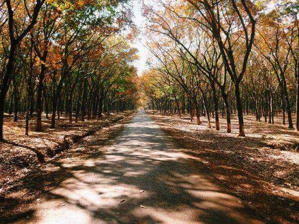 vùng tây nguyên mùa lá rụng