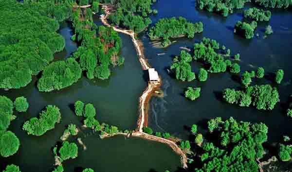 rừng ngập mặn là gì và hình ảnh rừng ngập mặn ở cần giờ