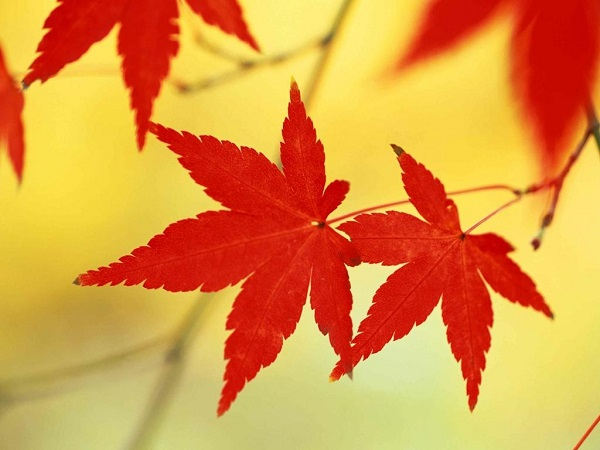 tại sao lá cây có màu xanh và lí do lá cây có màu đỏ