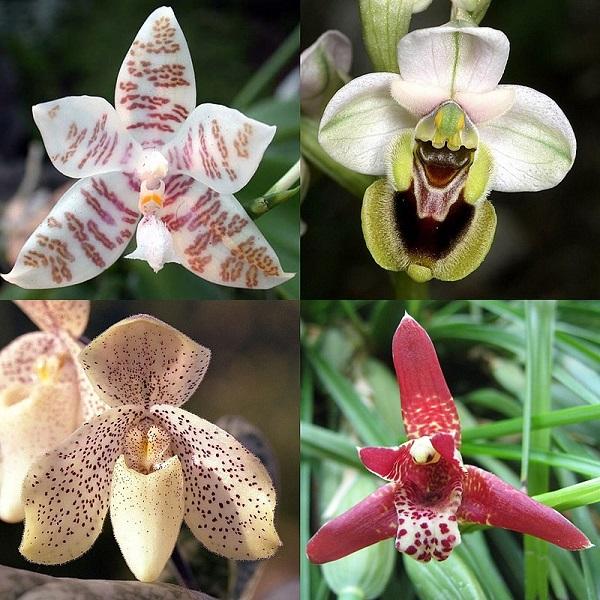Họ Lan là họ lớn nhất trong nhóm thực vật hạt kín một lá mầm