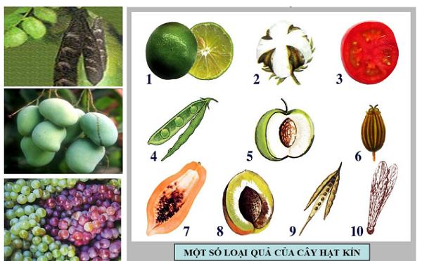 Một số loại quả của thực vật hạt kín