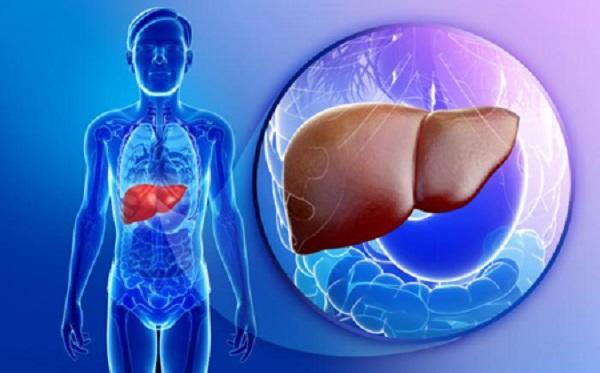Hẳn chúng ta đều biết, gan là một trong những bộ phận quan trọng nhất của cơ thể. Vậy bạn có bao giờ thắc mắc về vai trò của gan cụ thể như thế nào không. Hãy cùng DINHNGHIA.VN tìm hiểu rõ hơn và bổ sung kiến thức về cơ quan kỳ diệu này nhé! Vai trò của gan là gì? Gan được coi là nội tạng lớn nhất của cơ thể, vừa có chức năng ngoại tiết, vừa có chức năng nội tiết; vừa là kho dự trữ của nhiều chất cũng như là trung tâm chuyển hóa quan trọng của cơ thể và có tính chất sinh mạng. Chức năng chuyển hóa Một trong những nhiệm vụ chính của gan là cung cấp cho cơ thể một nguồn năng lượng liên tục, ngày cũng như đêm, no cũng như đói. Thực phẩm hấp thụ từ hệ thống tiêu hóa, sẽ được gan biến chế và chuyển hóa thành nhiều thể loại sau đó được dự trữ dưới nhiều hình thức khác nhau. Những nhiên liệu dự trữ này sẽ được mang ra dùng trong lúc chúng ta không ăn uống hoặc nhịn đói. Ðây là quá trình vô cùng phức tạp và lệ thuộc vào nhiều cơ quan khác nhau như tuyến giáp trạng (thyroid glands), tuyến tụy tạng (pancreas), tuyến thượng thận (adrenal glands), cũng như hệ thống thần kinh (parasympathetic & sympathetic systems), và một số cơ quan khác v.v. Sự chuyển hóa các chất cơ bản (glucid, lipid, proid) diễn ra ở nhiều cơ quan, tổ chức khác nhau trong cơ thể, nhưng ở gan quá trình chuyển hóa này diễn ra mạnh mẽ nhất. Chuyển hóa glucid Glucid cung cấp năng lượng sống cho cơ thể (nó đảm bảo 2/3 toàn bộ năng lượng sống trong cơ thể). Chuyển hóa glucid tại gan thông qua quá trình tổng hợp glycogen dự trữ và tăng phân giải glycogen để nhằm cung cấp năng lượng cho cơ thể. Chuyển hóa lipid Chuyển hóa lipid chủ yếu xảy ra ở gan. Các acid béo đến gan phần lớn tổng thợp thành triglyceride, phospholipid, cholesterol ester. Từ các chất này gan tổng hợp tạo lipoprotein và đưa vào máu để vận chuyển đến các tổ chức, tế bào khắp cơ thể. Chuyển hóa protid Chuyển hóa protid: Protein được dự trữ ở gan dưới nhiều protein enzyme và một số protein chức n0ăng, các protein này khi phân giải sẽ tạo thành các ac