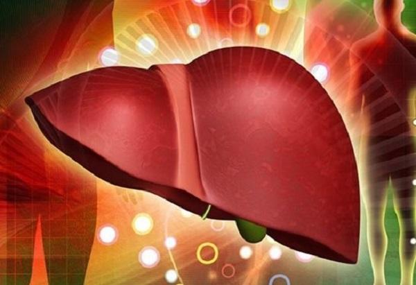 vai trò của gan và chức năng giải độc