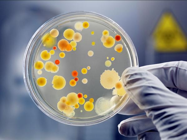 vi sinh vật gây bệnh cơ hội dưới kính hiển vi