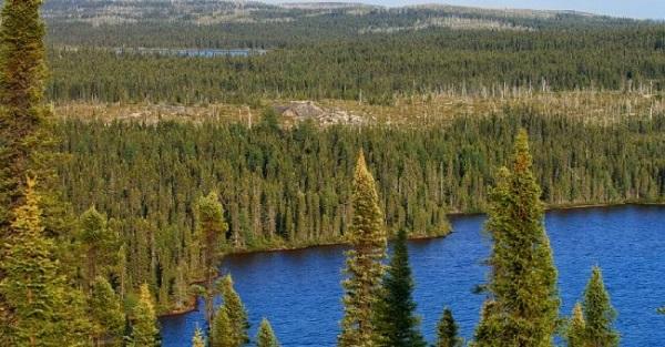 liên bang nga và hình ảnh về rừng lá kim đặc trưng