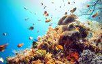 môi trường biển và đại dương, thành phần, tỉ trọng của nước biển