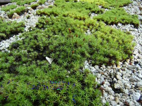 rêu là thực vật bậc cao hay thấp và môi trường sống của rêu