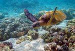 tài nguyên sinh vật biển