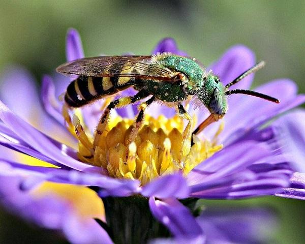thụ phấn chéo là gì và ví dụ