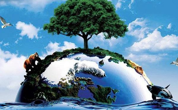 vai trò của thực vật là gì trong bảo vệ nguồn đất và nước
