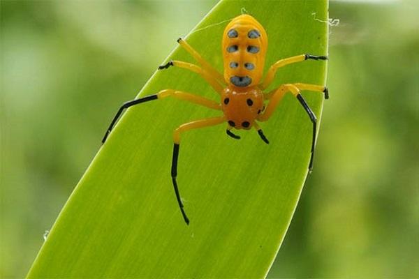 ý nghĩa thực tiễn của lớp hình nhện và đại diện tiêu biểu