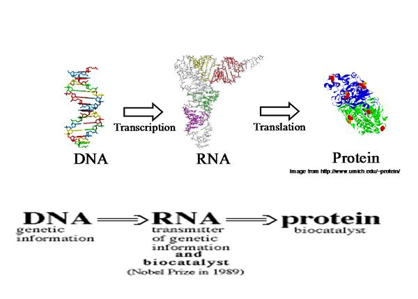 đặc điểm của arn trong bài 17 mối quan hệ giữa gen và arn