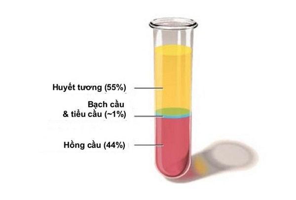 chức năng của lipid huyết tương và số lượng của lipid huyết tương trong máu