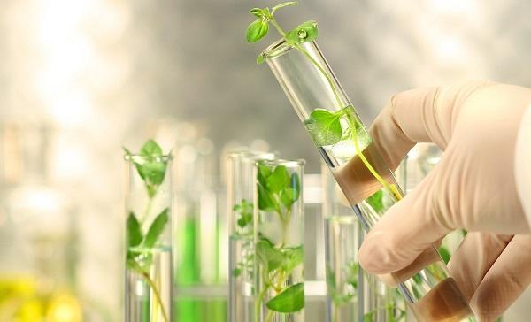 cơ sở tế bào học của nuôi cấy mô và ý nghĩa