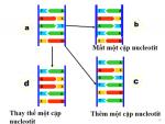 đột biến gen là gì và các dạng đột biến gen