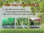 tại sao thực vật c4 có năng suất cao nhất và môi trường nơi thực vật c4 thường sinh sống