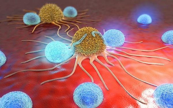 tế bào hela là gì và sự di chuyển của tế bào hela