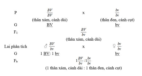 sơ đồ lai trong thí nghiệm của moocgan