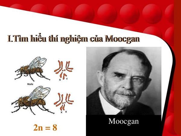 thí nghiệm của moocgan trên ruồi giấm có ý nghĩa quan trọng
