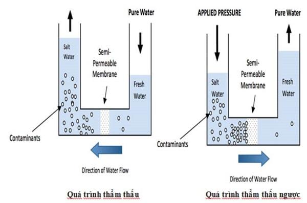 áp suất thẩm thấu là gì và hình ảnh minh họa