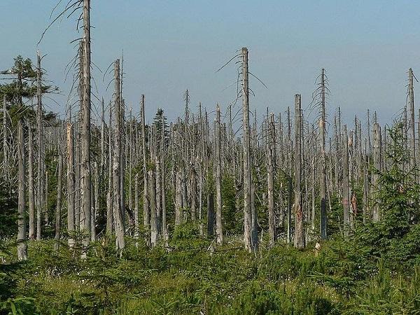 giải thích hiện tượng mưa axit và hình ảnh những khu rừng bị tàn phá do mưa axit