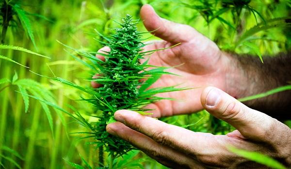định nghĩa 420 là gì