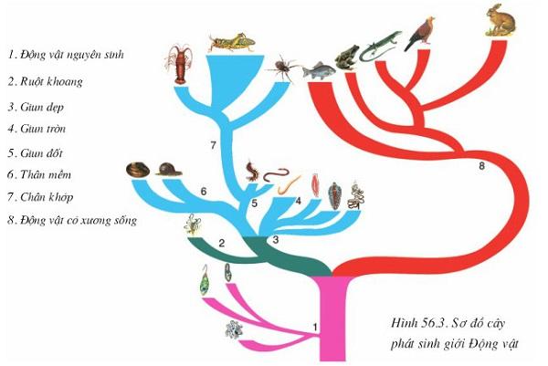 sơ đồ cây phát sinh giới động vật