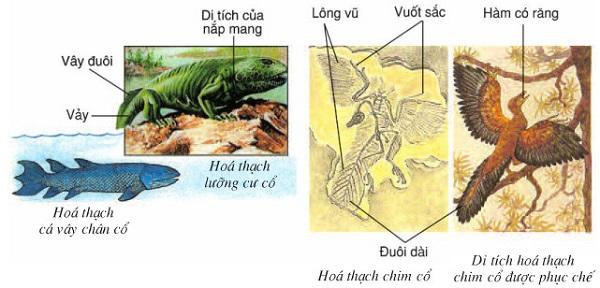 cây phát sinh giới đông vật và hình ảnh nhóm động vật gần nhau thì có nhiều tương đồng
