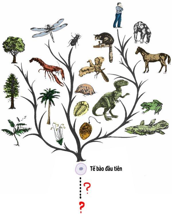 cây phát sinh giới động vật mang ý nghĩa quan trọng