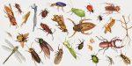 lớp sâu bọ vô cùng phong phú và đa dạng