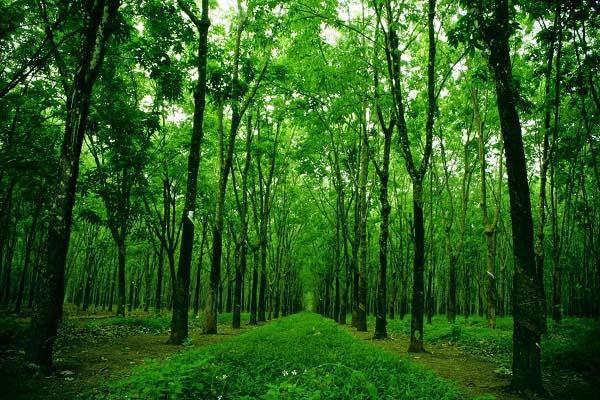 định nghĩa khái niệm rừng là gì