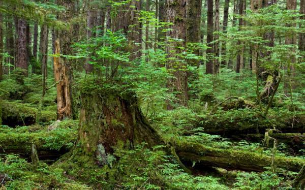 rừng là gì và vai trò của rừng