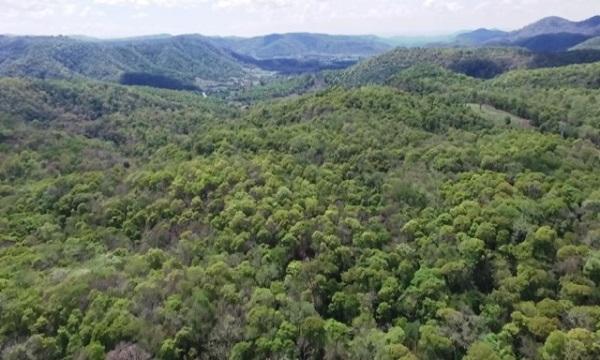 rừng là gì và hiện trạng rừng hiện nay