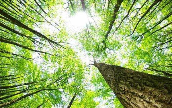 rừng là gì và một số biện pháp bảo vệ rừng