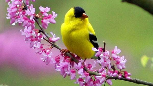 phân tích bài thơ mùa xuân nho nhỏ qua khổ 4 và khổ 5