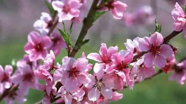 phân tích bài thơ mùa xuân nho nhỏ qua hai khổ thơ cuối