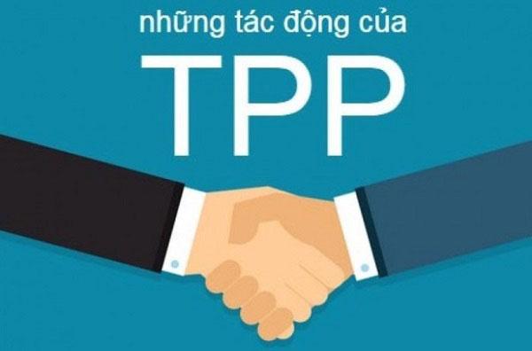 các lĩnh vực trong hiệp định tpp là gì