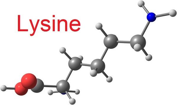 l-lysine là gì và cấu trúc của l-lysine
