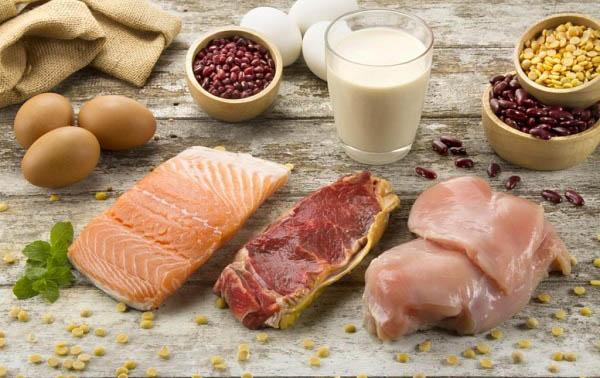 protein là chất gì và nguồn gốc của protein