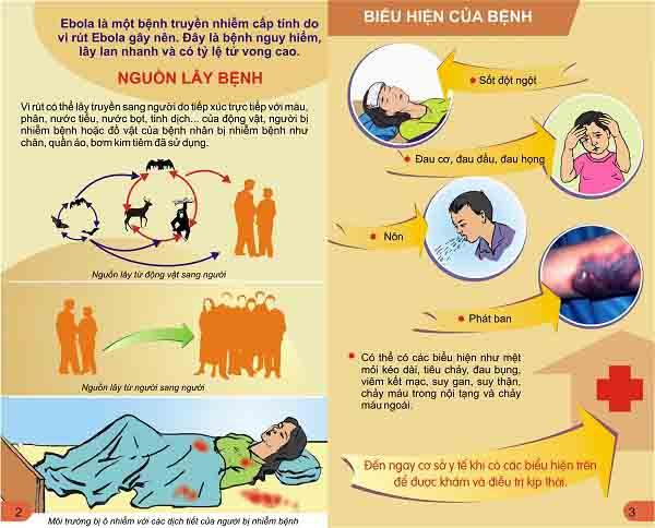 tìm hiểu về ebola là bệnh gì