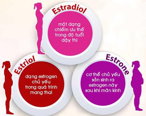 tác dụng của estrogen là gì