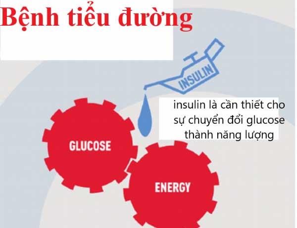 tác hại của việc thiếu insulin là gì
