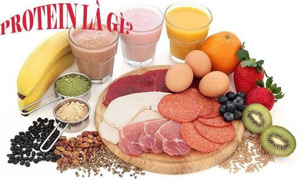 tìm hiểu về protein là gì