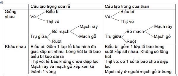 bảng so sánh cấu tạo trong của thân non và rễ